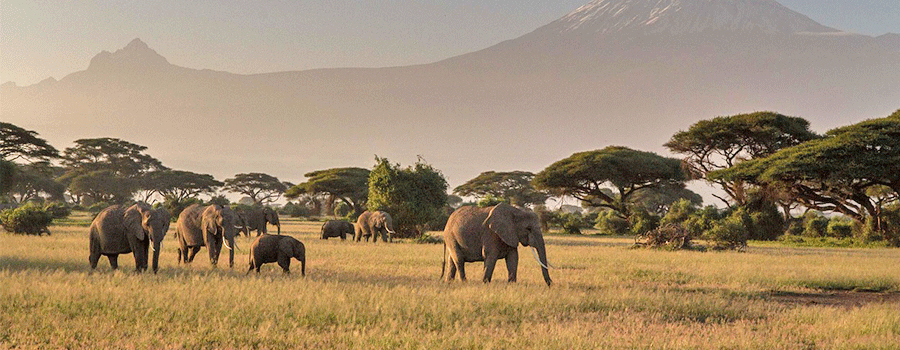 Luxury-Honeymoons-Safari